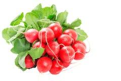 Fresh red radishes isolated on white Royalty Free Stock Image