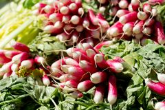 Fresh red radishes on a market Royalty Free Stock Image