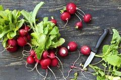 Fresh red radishes Royalty Free Stock Photography