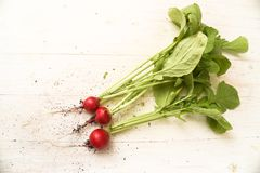 Fresh red  radishes with soil at the roots and green leaves on a. White wooden table with copy space,  high angle view from above Royalty Free Stock Photo