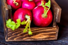 Fresh red radishes in wooden box close. Close up fresh bright red redishes in wooden box on dark wooden surface. Healthy diet concept, selective focus Royalty Free Stock Image