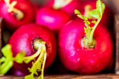 Fresh red radishes in wooden box close. Close up fresh bright red redishes in wooden box on dark wooden surface. Healthy diet concept, selective focus Stock Image