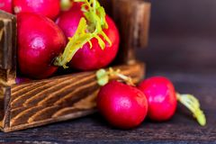 Fresh red radishes in wooden box close. Close up fresh bright red redishes in wooden box on dark wooden surface. Healthy diet concept, selective focus Royalty Free Stock Photos