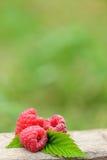 Fresh red raspberries on  blurred natural background. Fresh red raspberries on wooden table on  blurred natural background Stock Images