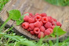 Fresh red raspberries on  blurred natural background Royalty Free Stock Images