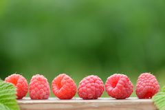 Fresh red raspberries on  blurred natural background Stock Photos