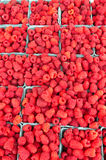 Fresh red raspberries on display. Colorful freshly picked red raspberries on display at the farmers market Royalty Free Stock Photos