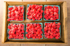 Fresh red raspberries on display at the market. Freshly picked red raspberries on display at the farmers market Stock Images