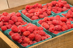 Fresh red raspberries on display at the market. Freshly picked red raspberries on display at the farmers market Stock Photos