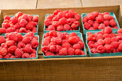 Fresh red raspberries on display at the market. Freshly picked red raspberries on display at the farmers market Stock Image