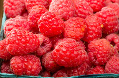 Fresh red raspberries on display at the market. Freshly picked red raspberries on display at the farmers market Stock Photography