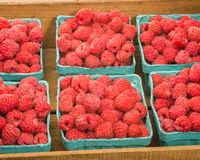 Fresh red raspberries on display at the market. Freshly picked red raspberries on display at the farmers market Royalty Free Stock Photo