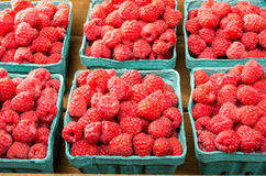 Fresh red raspberries on display at the market. Freshly picked red raspberries on display at the farmers market Royalty Free Stock Photography