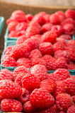 Fresh red raspberries on display at the market. Freshly picked red raspberries on display at the farmers market Royalty Free Stock Image