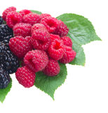 Fresh red raspberries Royalty Free Stock Image