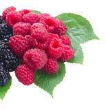 Fresh red raspberries Royalty Free Stock Image