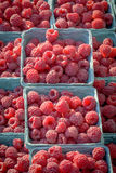 Fresh red raspberries for sale at a farmers market. Red fresh raspberries in cartons for sale Stock Images