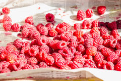 Fresh red raspberries in a wooden box,raw healthy food Royalty Free Stock Image