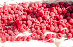 Fresh red raspberries in a wooden box,raw healthy food Stock Image