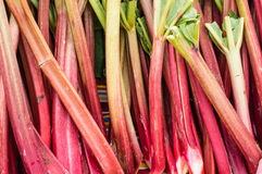 Fresh red rhubarb at the market Royalty Free Stock Images