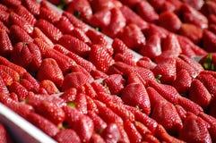 Fresh red ripe California strawberries. Stock Images