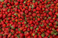 Fresh red ripe organic strawberry on the farmers market. Close-up berry background. Healthy vegan food.  stock image