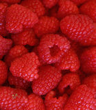 Fresh red ripe raspberries close up Royalty Free Stock Photos