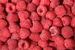 Fresh red ripe raspberries. Stock Images