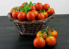 Fresh red ripe salad tomatoes Royalty Free Stock Photo
