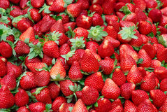Fresh Red Ripe Strawberries. Pile of fresh red ripe strawberries Royalty Free Stock Image