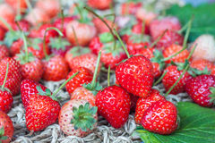 Fresh red ripe strawberries Stock Photos
