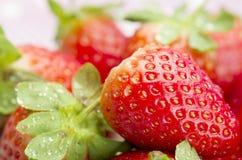 Fresh red ripe strawberries. Stock Photo