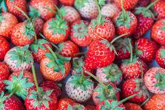 Fresh red ripe strawberries Stock Image