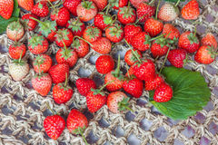 Fresh red ripe strawberries Royalty Free Stock Photos
