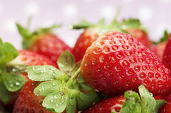 Fresh red ripe strawberries. Stock Photography
