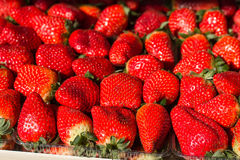 Fresh Red Ripe Strawberry Stock Image