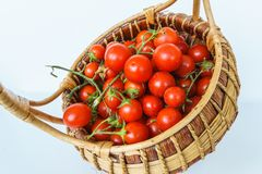 Fresh garden tomatoes in a basket, Royalty Free Stock Photo