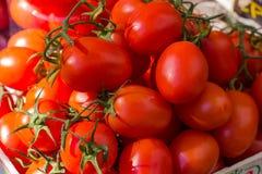 Fresh Red Ripe Tomatoes Stock Photo