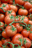 Fresh, red, ripe tomatoes, some still attached to the vine, for. Fresh Ripe Tomatoes on the Vine, at a Farmers Market stock images