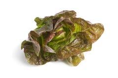 Fresh red Romaine lettuce. On white background Royalty Free Stock Photo