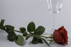 A fresh red rose big bud and petals with green leaves on white background and one champagne glass. Empty space Felicitation Minimalist concept Copy Space and stock image