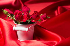 Fresh red rose Stock Photos