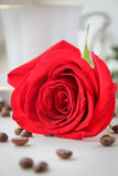 Fresh red rose and coffee. Stock Image