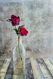 Fresh red rose in glass bottle on wooden background Stock Images