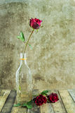Fresh red rose in glass bottle on wooden Royalty Free Stock Photography