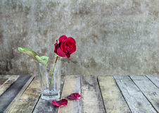Fresh red rose in glass bottle on a wooden background Royalty Free Stock Photos