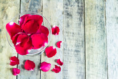 Fresh red rose in glass on wooden background Stock Photos