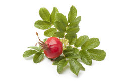 Fresh red rose hip and leaves Royalty Free Stock Image