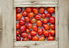 Fresh red rose hips in old wooden  frame Royalty Free Stock Image