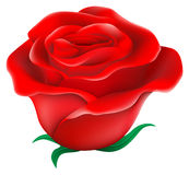 A fresh red rose Stock Photography